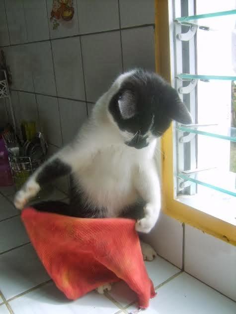 """Résultat de recherche d'images pour """"chat qui fait le ménage"""""""