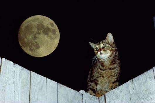 """Résultat de recherche d'images pour """"chat et la lune"""""""